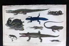 Goldsmith 1850 Hand Col Print. Crocodile, Alligator, Snake, Lizards 27